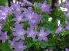 20060522_belflower_1