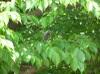 20060531hiyodori