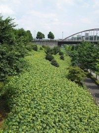 20060814himawari_5
