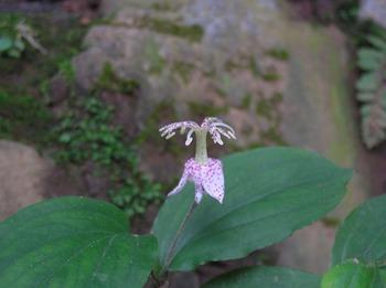 20070915_yamahototoghisu