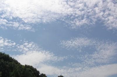 200800814_urokogumo