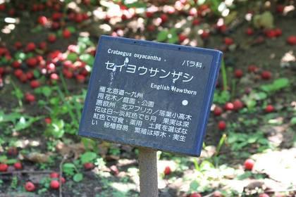20090916_seiyosanzashi