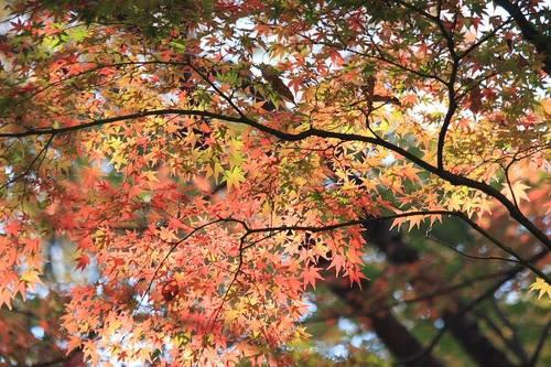 20091121_yakushiike2_1