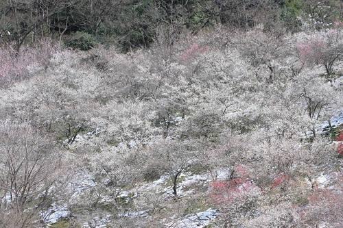 20100312_baigou_w850