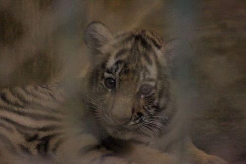20100902_tiger