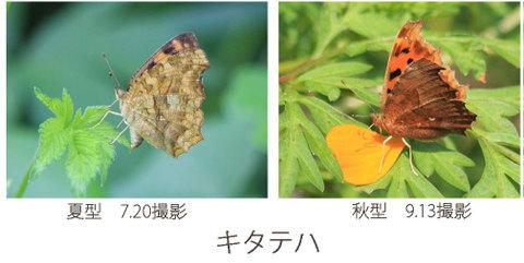 Kitateha_hikaku