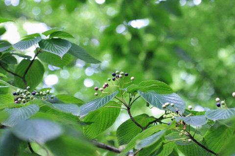 201107mizuki750