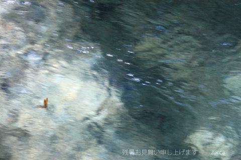 2011zanshomimai900