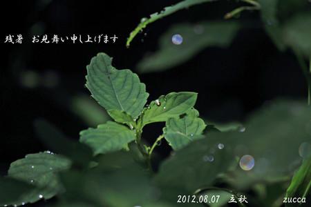 Img_8310kitsurifune700s2