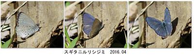 20160417sugitani1500