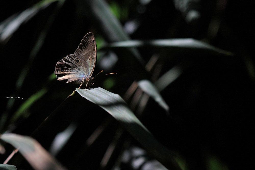 ヒカゲチョウ 2011.09