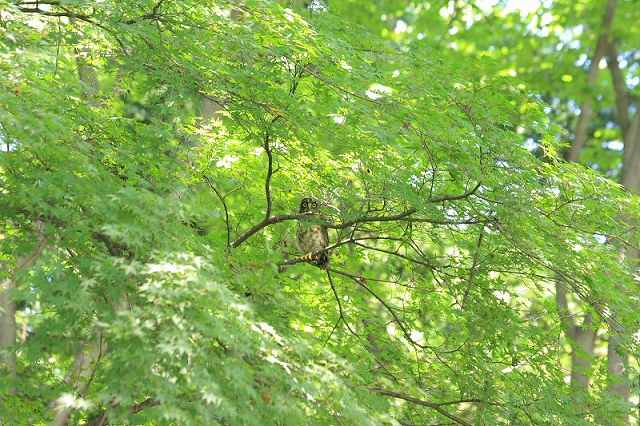 20100727_aobazuku_w640