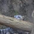 20091228_snowleopard_3