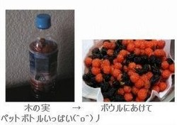 020070623_kinomi_js_1