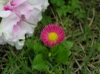 20060514_pink