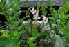 20060605cberry_o