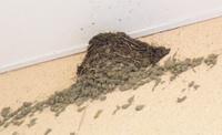 20050514swallows