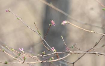 20090214_uguisukagura