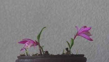 20090406_tairintokisou