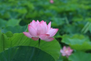 20090717_kodaihasu_3w950