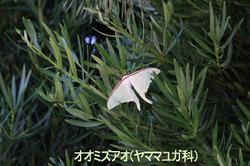 20090828_oomizuaow800