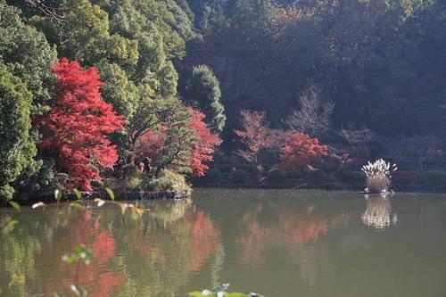 20091121_yakushiike