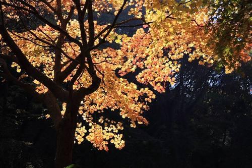 20091121_yakushiike2