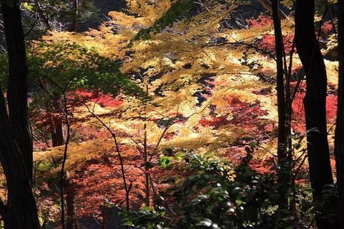 20091121_yakushiike2_3