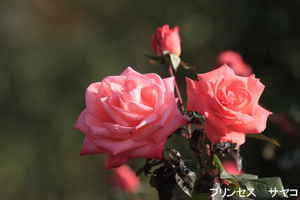 20091128_princess_sayako