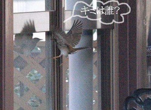 20100225_shiroharaw650