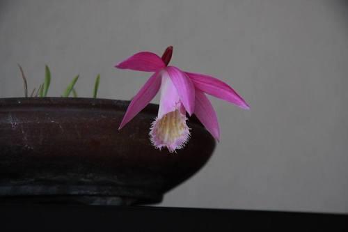 20100429_tairinntokisou