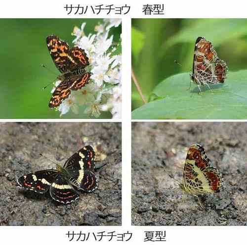 20100716_sakahachi_w700