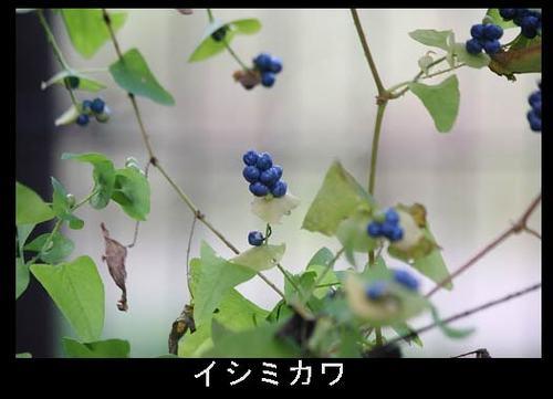 20101027_ishimikawa_w500