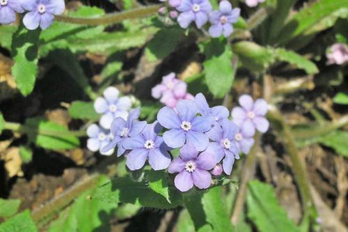 201104yamarurisou