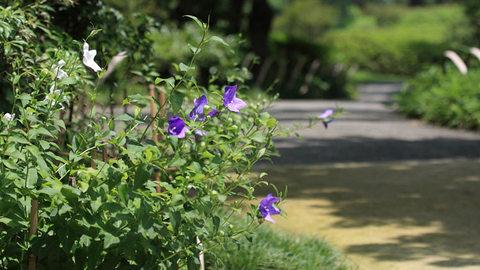 201108_nihonteien_750