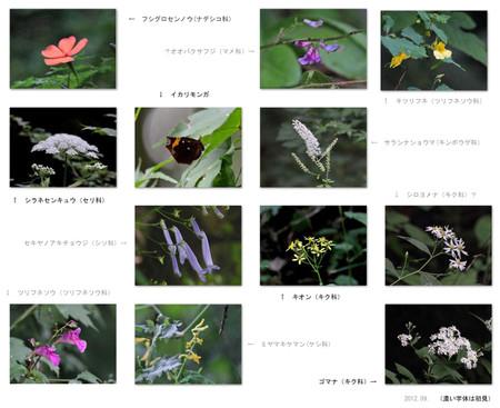 201209yasou1200s_2