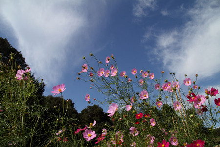 Img_4992cosmos1000s