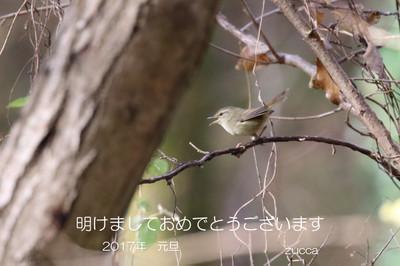 201701_uguisu_w1200