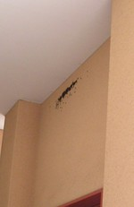 20050509swallow
