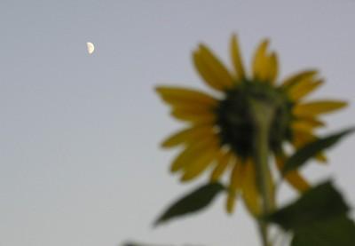 moon_sunf912