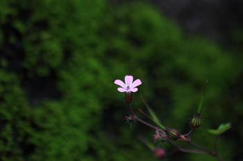 20090617_himefuro