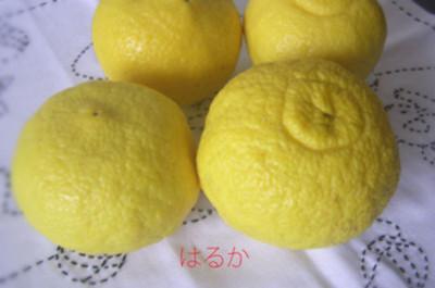 201205haruka